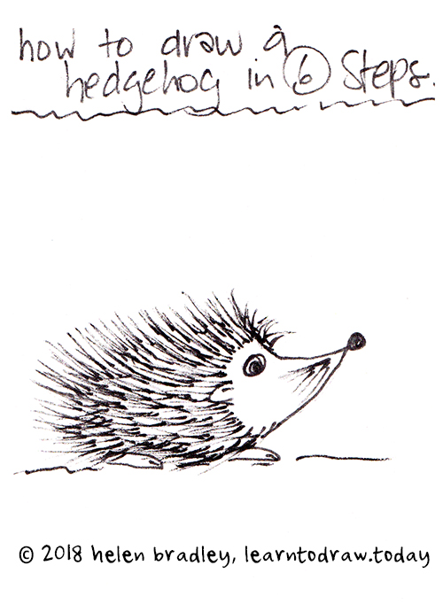Baby Hedgehog Learn To Draw